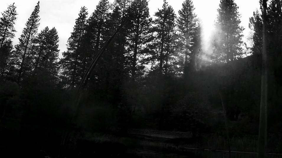 DEEP WATER TREE SHOTS.CLIP